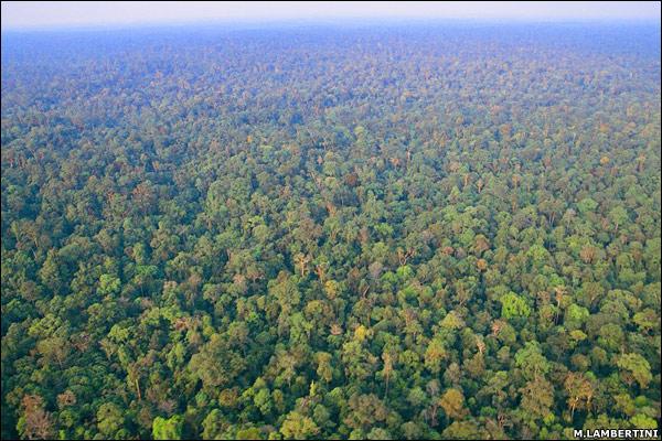 Inilah hutan indonesia gan.sangat luas sekali,bahkan katanya negara